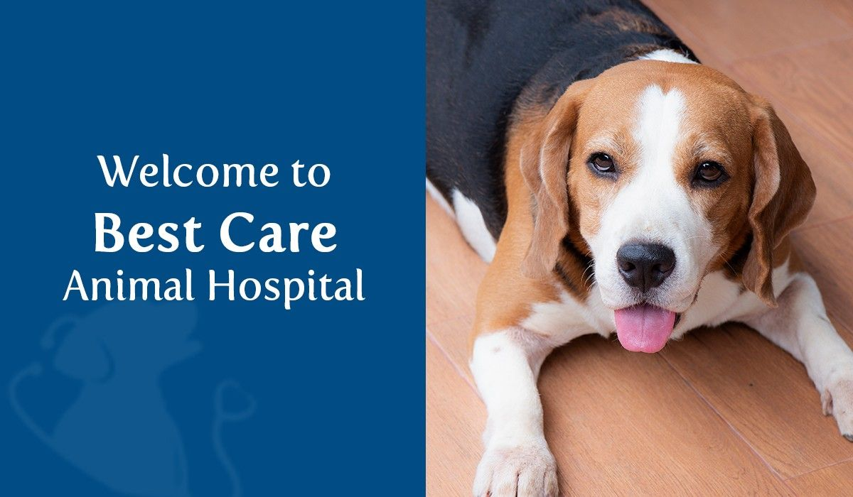 Welcome to Best Care Animal Hospital