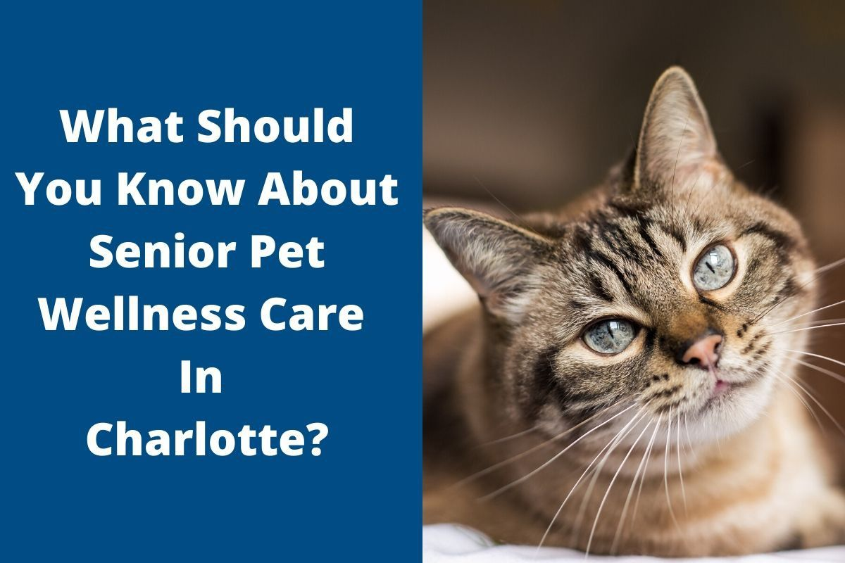 What-Should-You-Know-About-Senior-Pet-Wellness-Care-In-Charlotte_-
