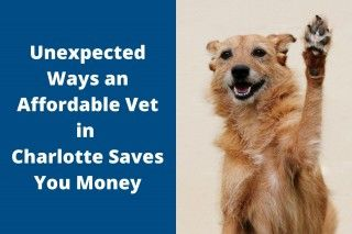 Unexpected-Ways-an-Affordable-Vet-in-Charlotte-Saves-You-Money-